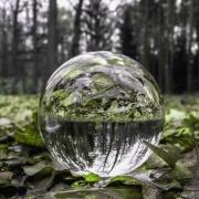 Neue Perspektiven durch Waldatmen