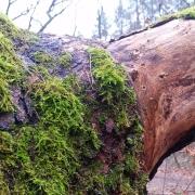 Wald ist Kraft
