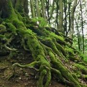 Waldatmen - Gesundes Atmen in der heilsamen Atmosphäre des Waldes